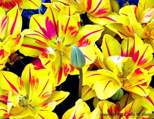 Bud among flowers