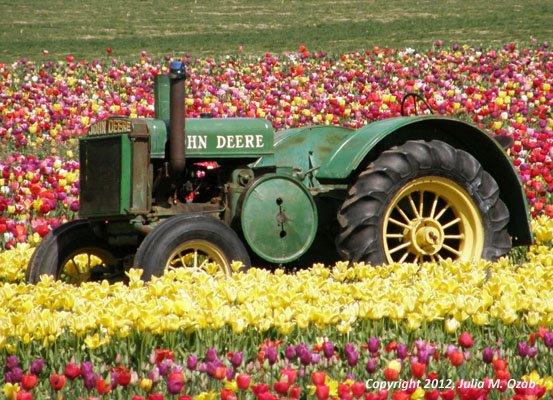 John Deere tractor in a tulip field