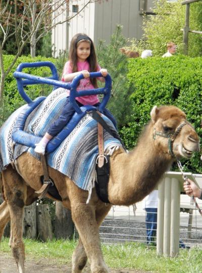 Anna rides a camel