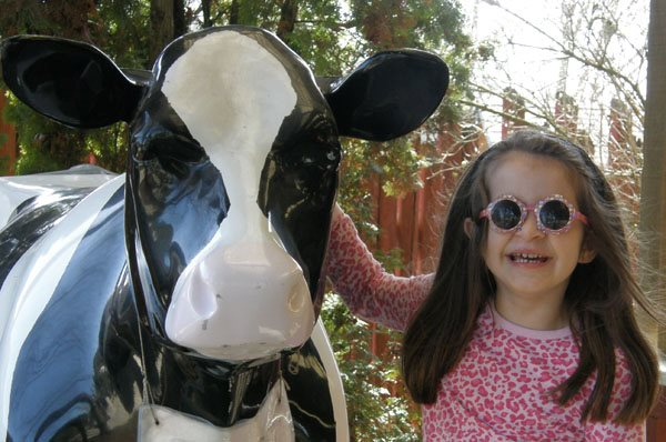Anna and the milking cow