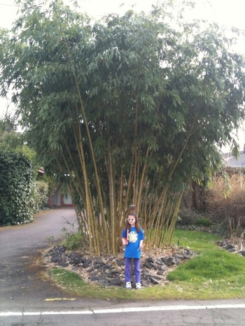 Anna and a bamboo tree