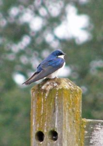 A blue bird of some kind