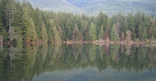 Reflecting trees in lake