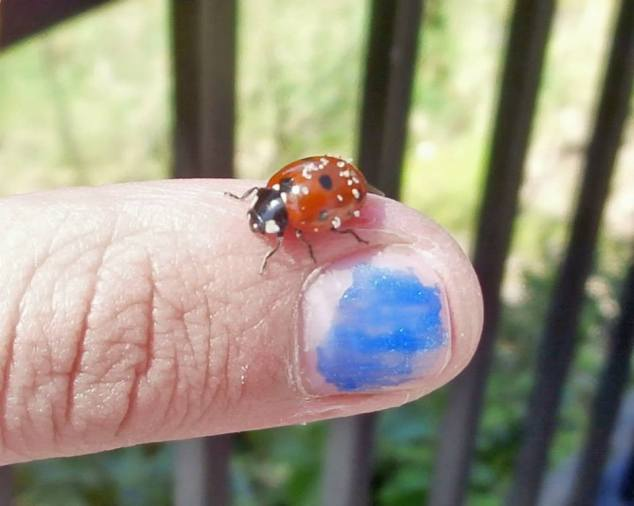 A curious ladybug at Cape Perpetua