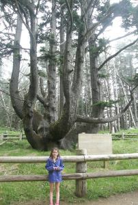 Anna at the Octopus Tree