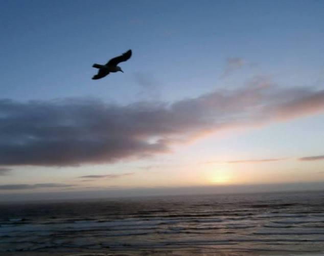 A seagull at Nye Beach