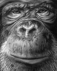 Mr. Chimp (black and white)