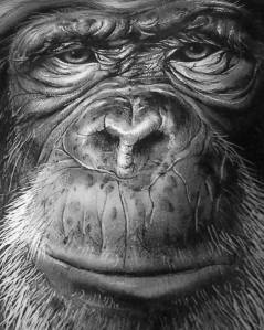 Mr. Chimp (black and white)