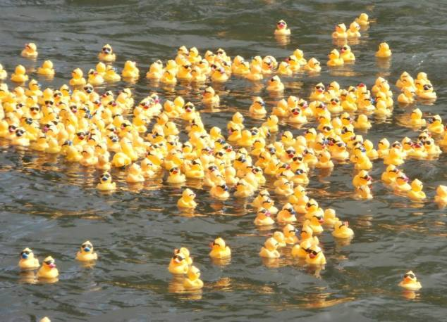 Hundreds more rubber ducks
